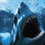 forex sharks